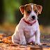 Cinomose: O seu cão é vacinado? A Prevenção é o Melhor Tratamento!