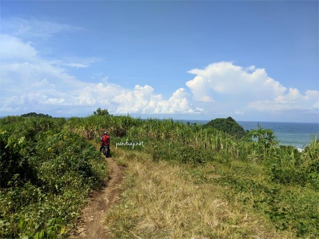 Jalan menuju pantai di Ngadipuro