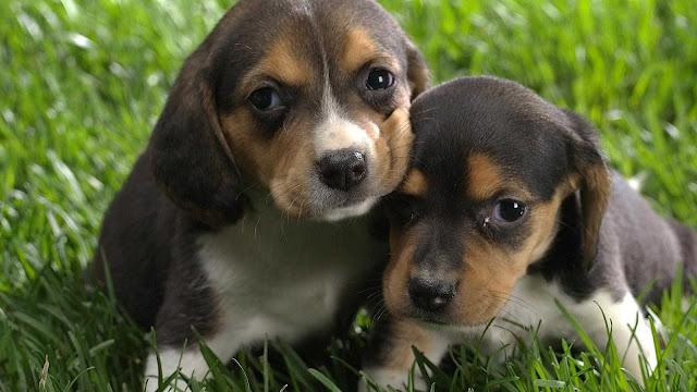 cuteness cute dog wallpaper