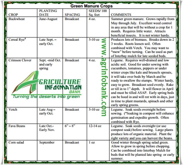 Green Manure I www.agrinfobank.com