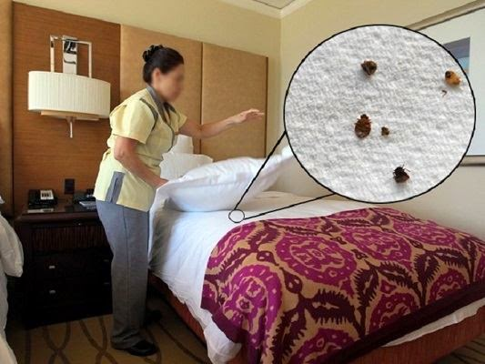 How Can One Get Bed Bugs