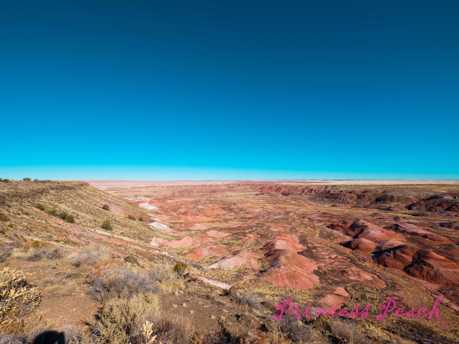Petrified-Forest-National-Park-石化森林國家公園-Painted-Dessert