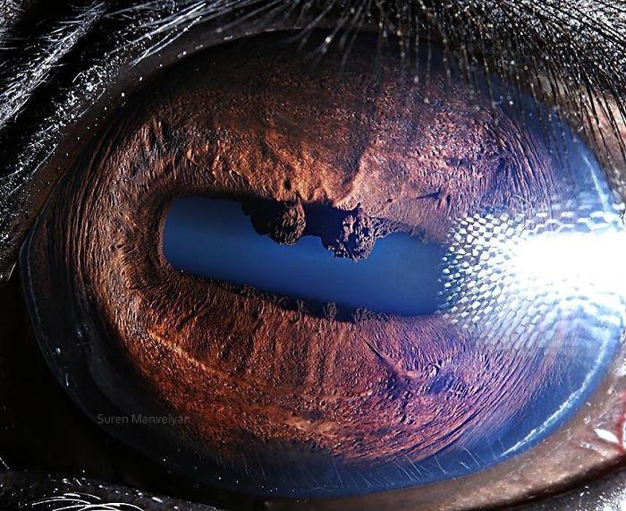 Horse Eyes Close Up Photograph