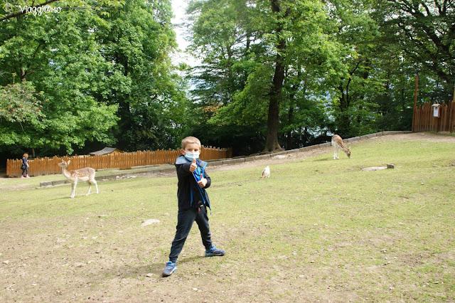 I daini, alcuni degli animali della Fattoria, nel Parco Pallavicino di Stresa