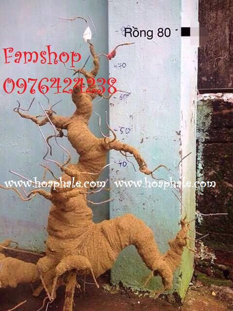 Goc bonsai mai dao the rong tai Hai Ba Trung