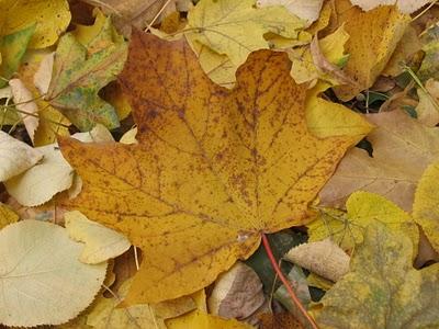 http://1.bp.blogspot.com/-O1G3qL7C04A/TsPNrx7KwQI/AAAAAAAAA8w/OYCos5101P8/s1600/Nature_Plants_Old_Autumn_leaf_008448_.jpg