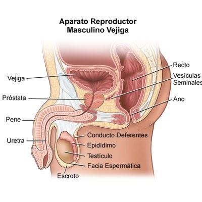 radioterapia de vejiga o próstata