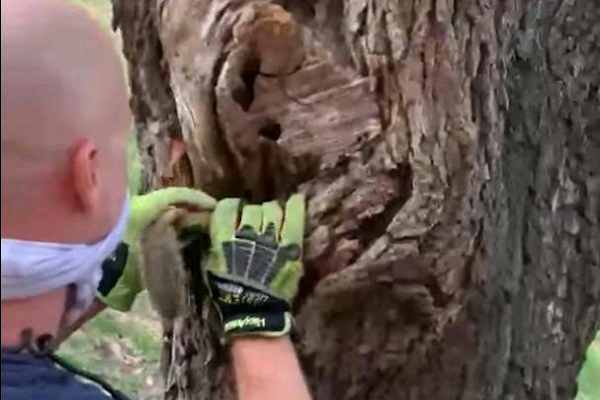 Texas firefighters rescue squirrel stuck in tree's knothole