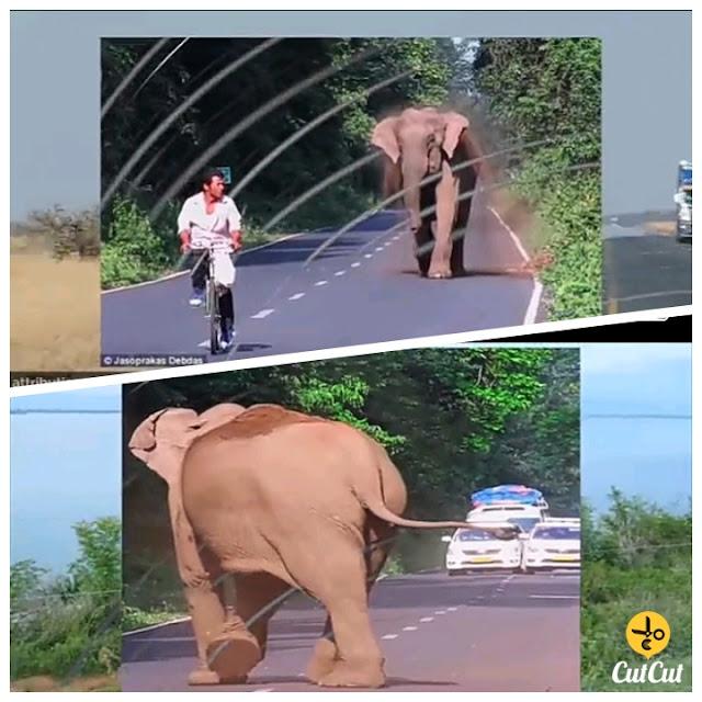 ہاتھی نے سائیکل والے پر حملہ کر دیا مگر جب وجہ معلوم ہوئی تو سب ہاتھی کی ذہانت پہ خوش ہو گئے۔