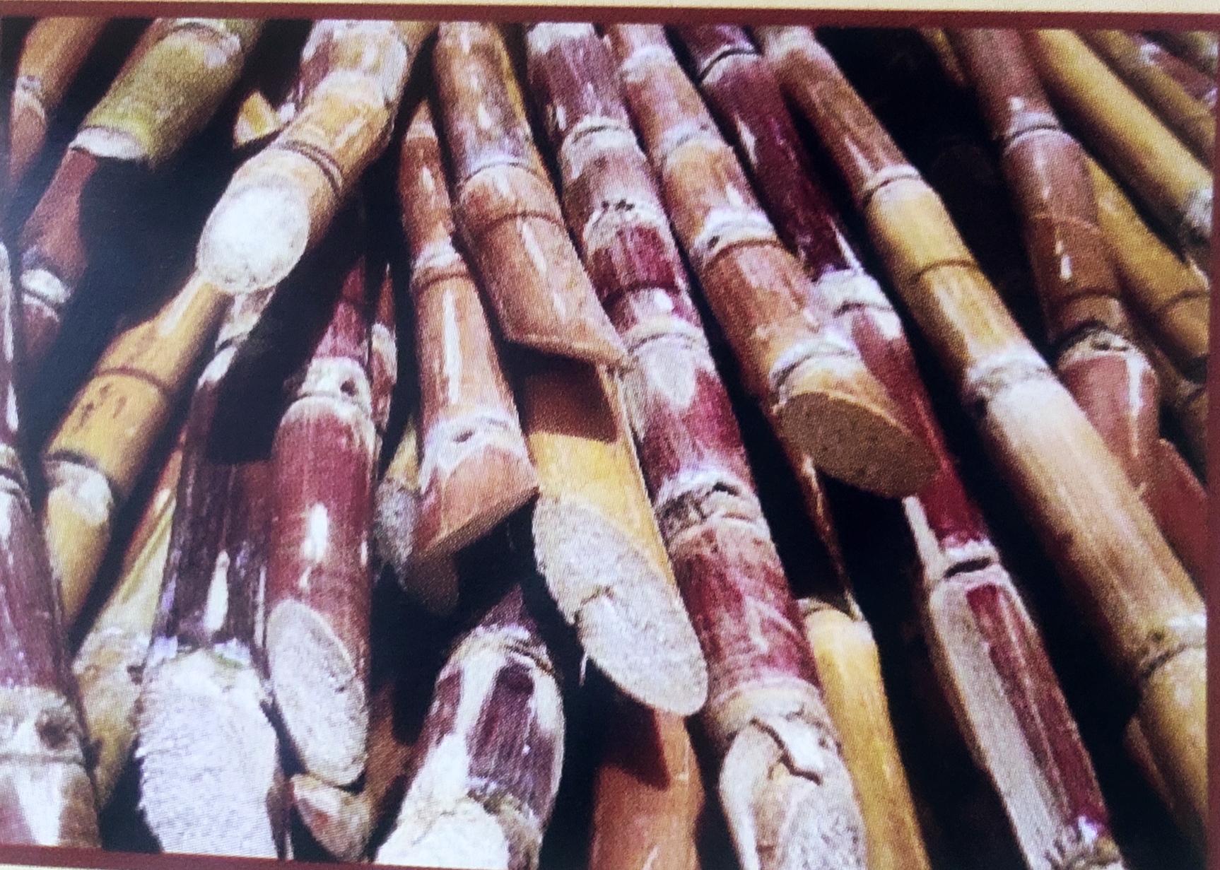Image contains sugar cane