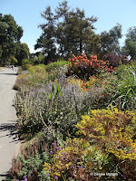Perennial borders - Christchurch Botanic Gardens, New Zealand