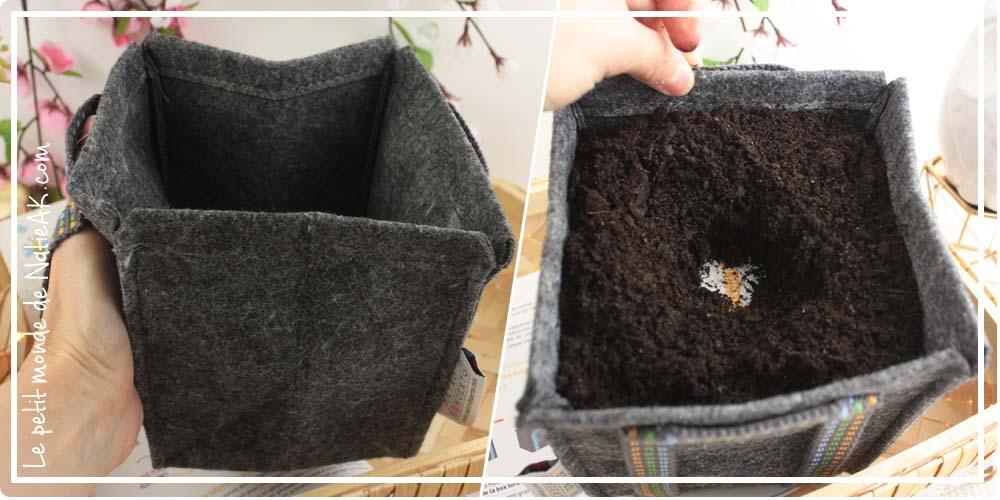 semer des fleurs pour les abeilles