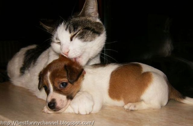 Cat and puppy.