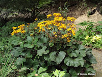 Yellow blooms, Pukekura Park, New Plymouth, New Zealand
