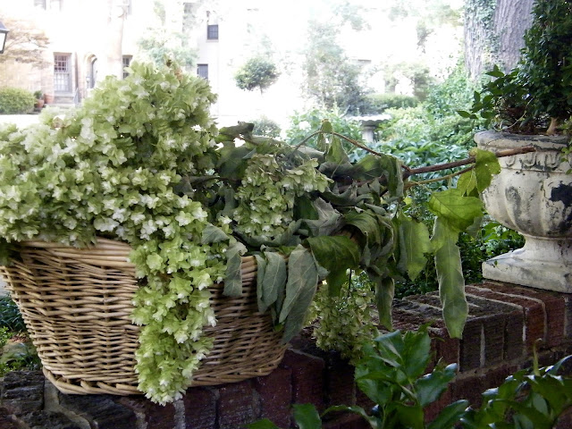Laundry basket of drying hydrangea blooms sit on brick wall waiting to be hung out to dry.