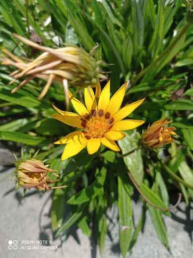 Foto Hasil Kamera Redmi Note 9 Outdoor