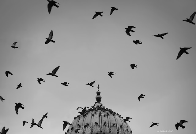 Black and White Minimal Art photograph of the Dome of Albert Hall Museum, Jaipur, against the sky, with birds flying across.