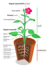 perkembangan generatif tumbuhan