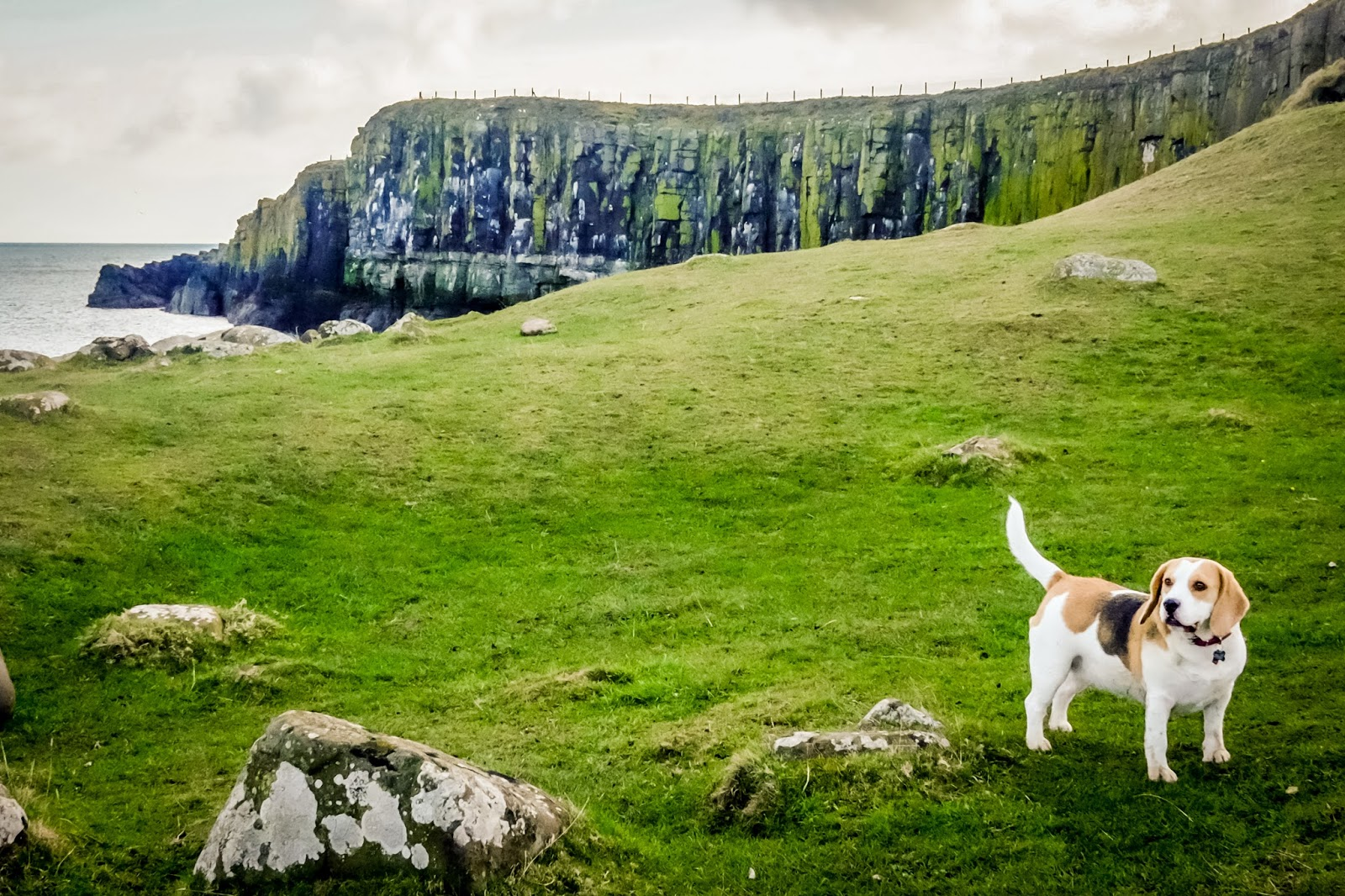 A Dog Friendly Break In Embleton Northumberland Mandy