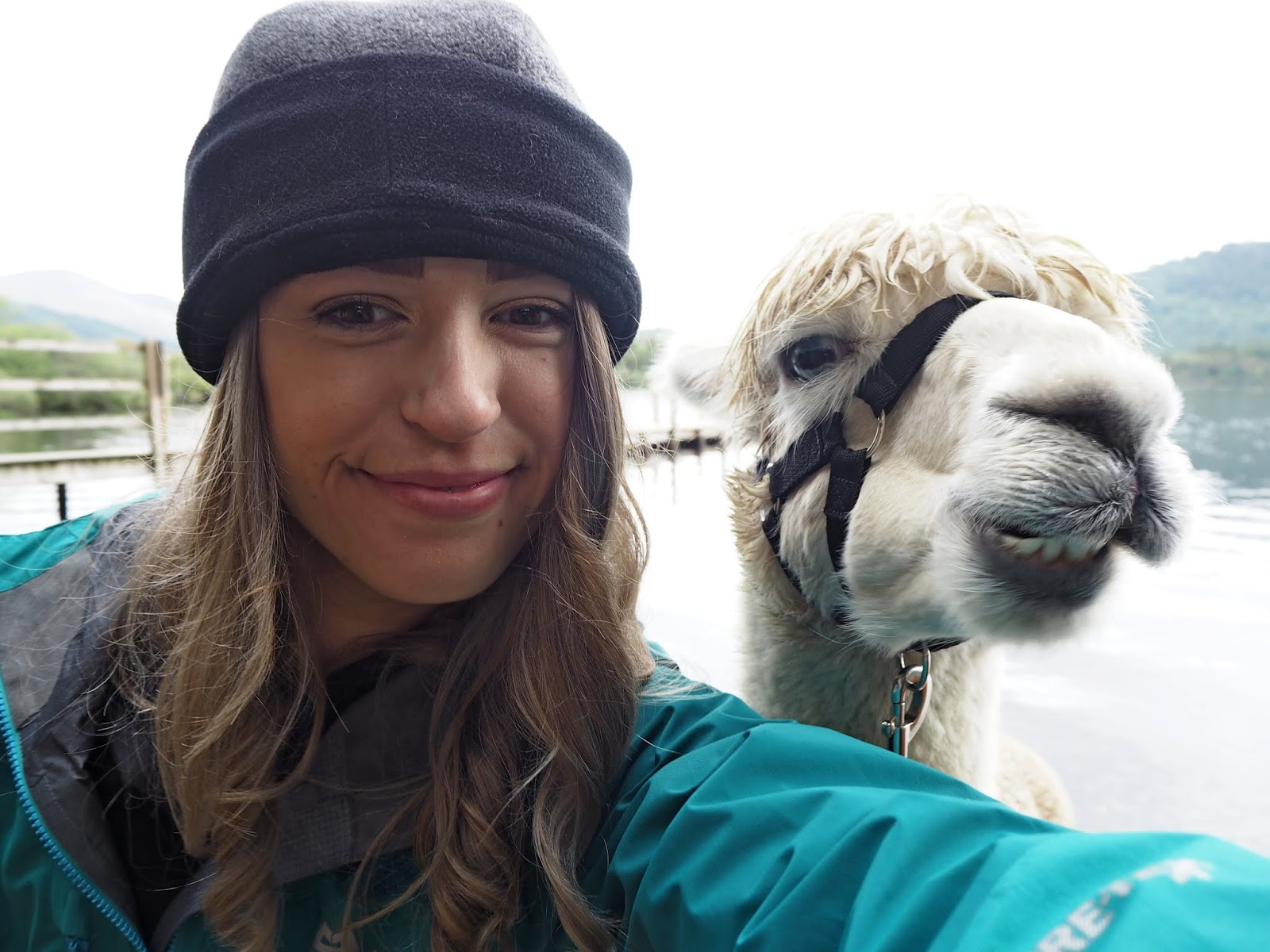Selfie with Alpaca