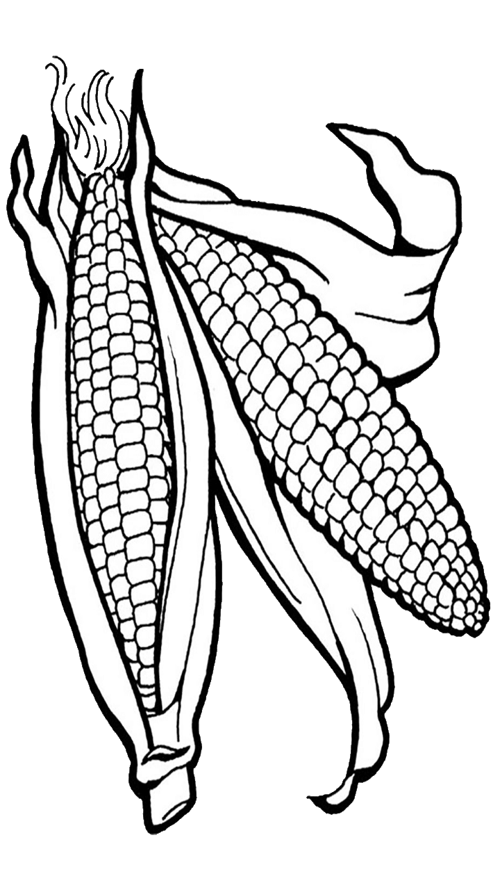 corn clipart image 163 sketch coloring page