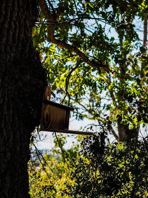 Eekhoornvoederhuisje op de camping