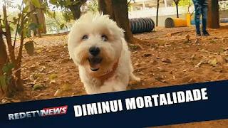 Estudo conclui que contato com cães reduz o risco de morte em 20%