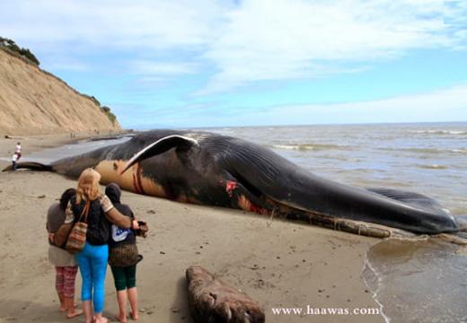 الحوت الازرق,صوت الحوت الازرق,الحوت الأزرق,صوت الحوت,ضخامة الحوت الازرق,ظهور الحوت الازرق,الحوت الازرق في ليبيا,الحوت الازرق في مطروح,الحوت,صوت الحوت الأزرق,للحوت الأزرق,الحوت الأزرق العملاق,حياة الحوت الازرق,حقيقة الحوت الازرق,وزن الحوت الازرق,طول الحوت الازرق,حجم الحوت الازرق,صيد الحوت الازرق,صوت الحوت الازرق كامل,طلوع الحوت الازرق,فيديو الحوت الازرق,الحوت الازرق عن قرب,الحوت الازرق وصوته,اسرار الحوت الازرق,صوت الحوت الازرق يدل,صوت الحوت الازرق كذب,الحوت الازرق كورونا,صوت الحوت الازرق مرعب