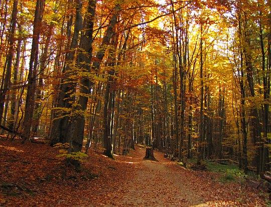 Nie do wiary jakaż ta jesień jest tu barwna.