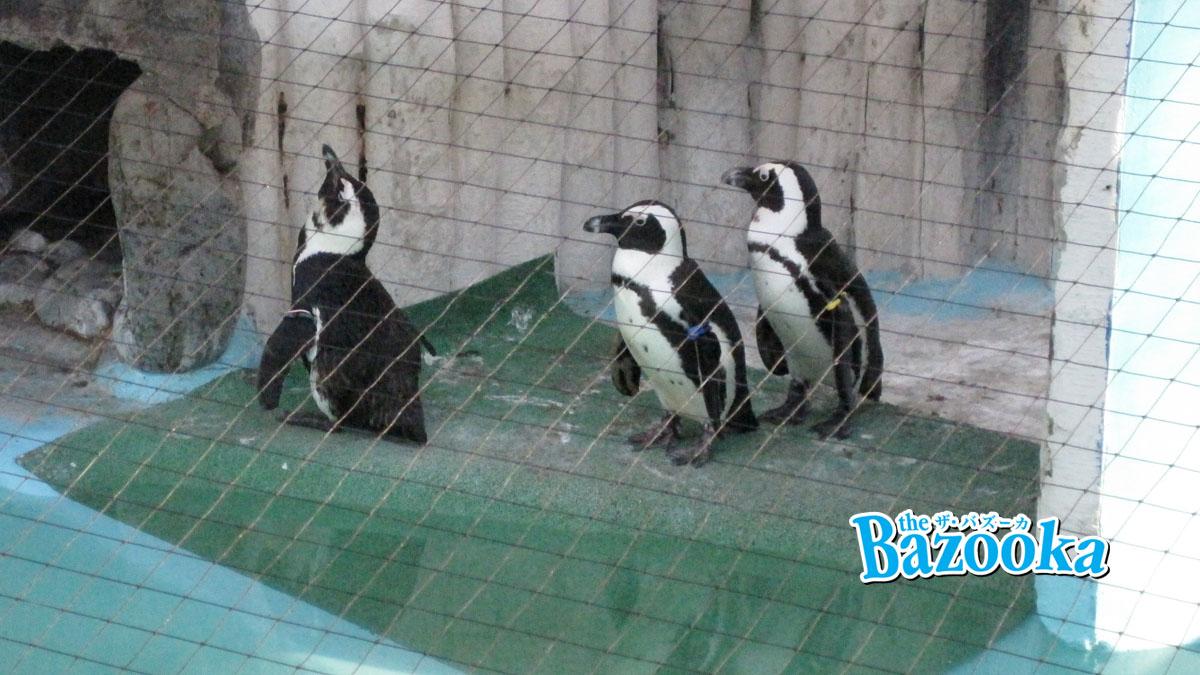動物園と水族館は本当に必要なのか:動物園苦手な僕が思うこと
