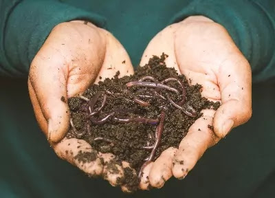 Which is the best compost for garden flower and other fruits.