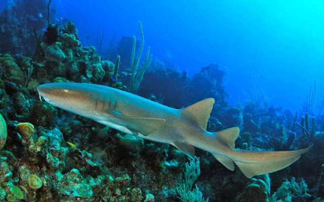 La fosse aux requins - Aquarium de Lyon