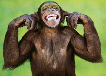 majmun.jpg