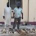 DEUX TRAFIQUANTS D'IVOIRE NIGÉRIANS SOUS LE COUP DE LA LOI, UNE PROUESSE DE LA JUSTICE ENVIRONNEMENTALE TOGOLAISE !
