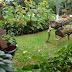 Moradora do bairro Fidélis vence a 3ª edição do Concurso de Jardins - CURTA BLUMENAU