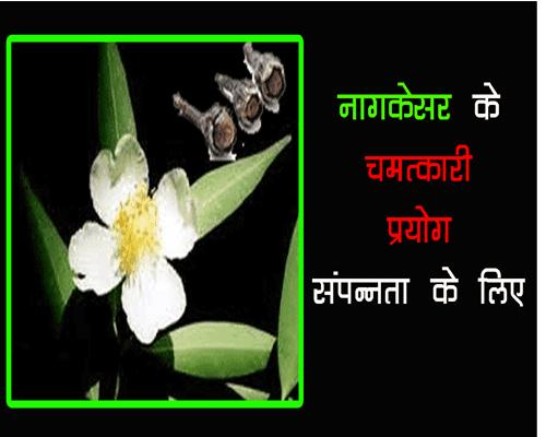 nagkesar ke prayog jyotish mai, nagkesar totkey