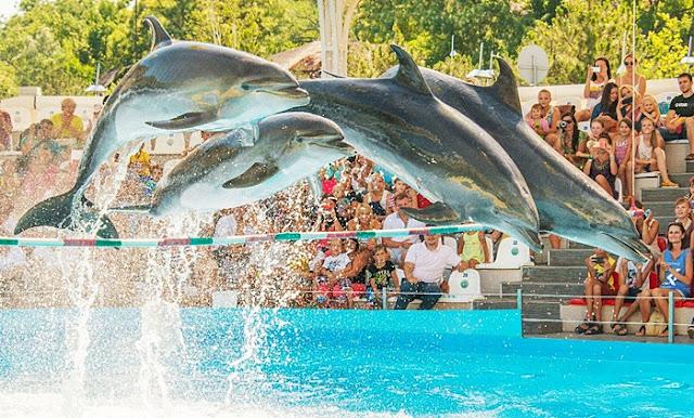 Phuket dolphin show