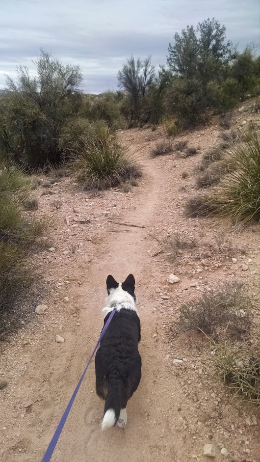 Happy Trails with Dora - Dead Horse