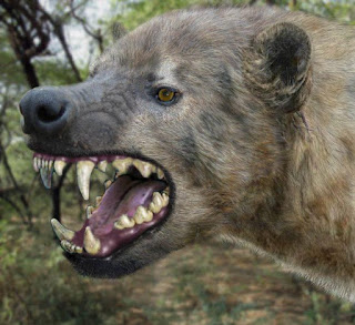 Giant Hyena escapes from Zoo in Nigeria   NELOC News International
