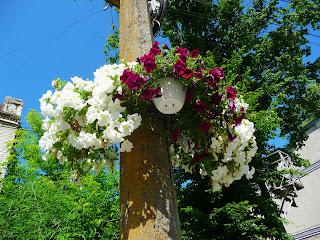 Калуш. Улицы украшены вазонами с цветами