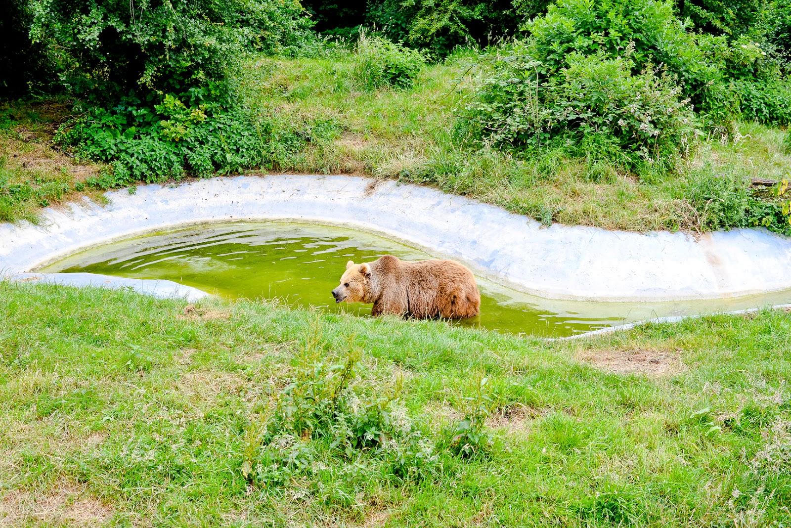 whipsnade zoo bears