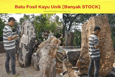 batu fosil kayu termahal