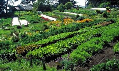 Une des innovations de la permaculture est d'apprécier l'efficacité et la productivité des écosystèmes naturels, par une observation attentive, et d'en dériver des principes directeurs universels pouvant nous aider