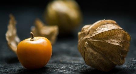 manfaat tumbuhan ciplukan