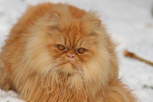 Do Cats Like Snow - Modkat