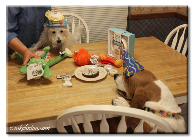 Basset and Westie wearing party hats at birthday party
