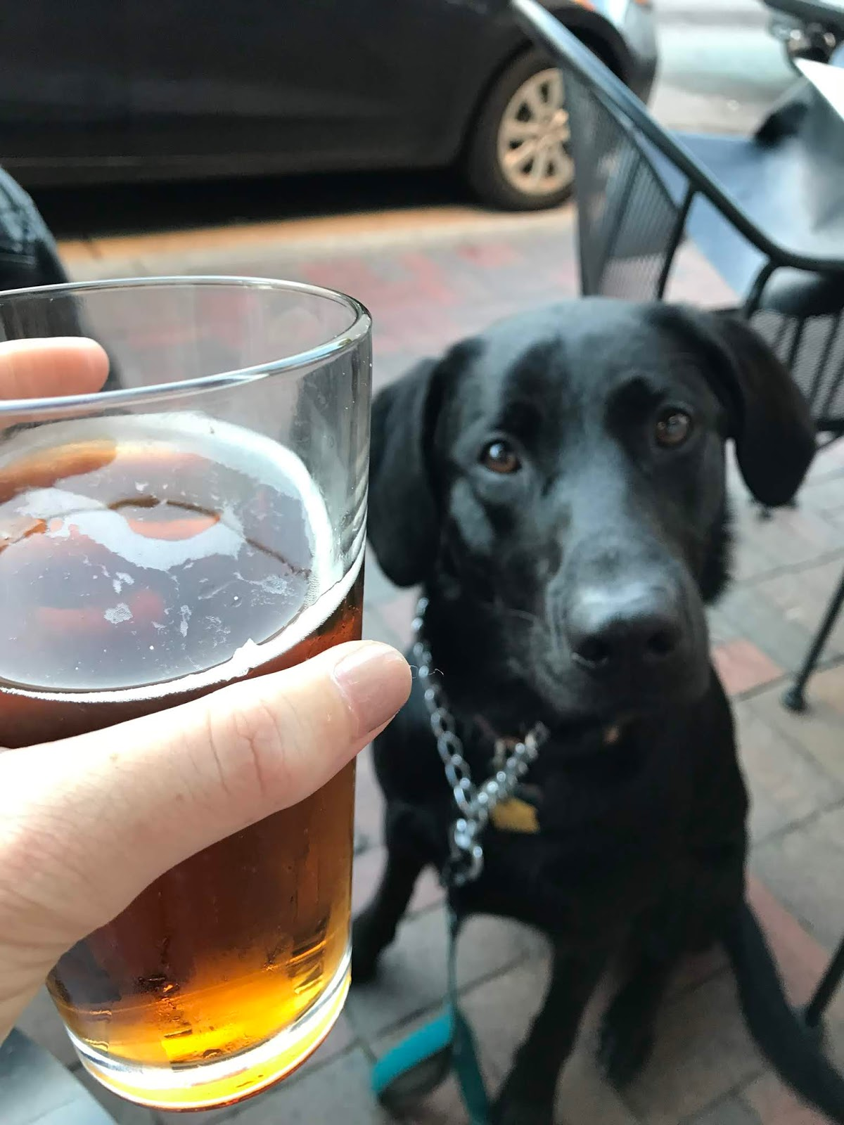 albus tries to drink my beer at Johnnie MacCracken's
