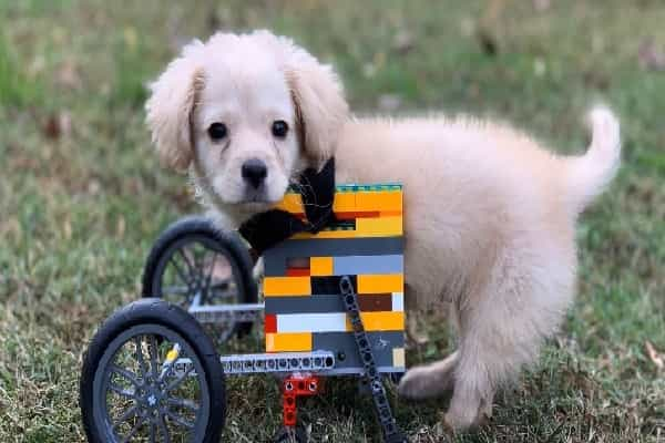 Kid Meets Disabled Pup & Makes Her Mobility Device Out Of Legos
