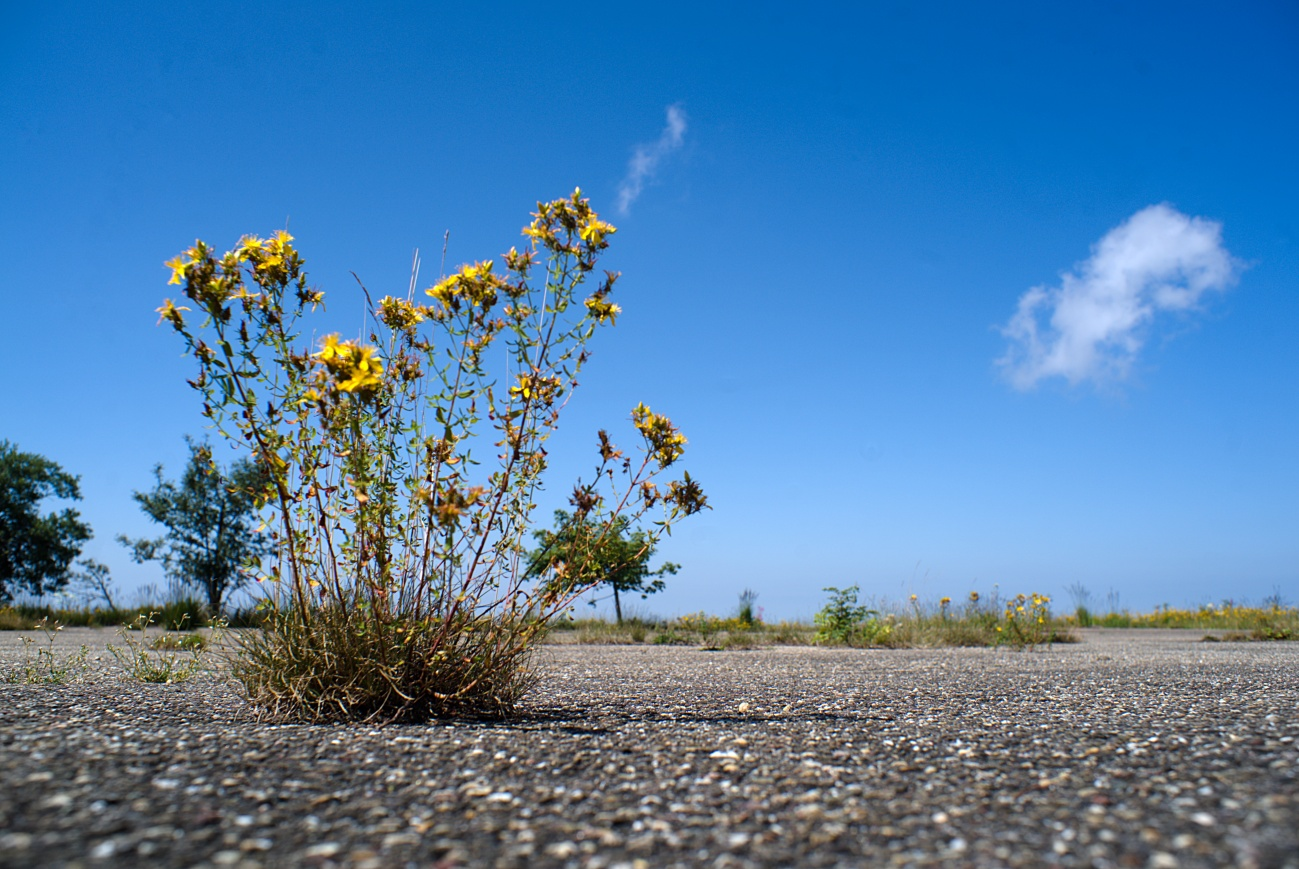 """Zum Tagesabschluss — """"Close to the ground"""" #19 — Die Natur gewinnt immer"""
