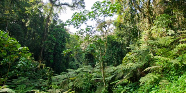 DRC: the challenges of implementing the Redd+ process on forest management